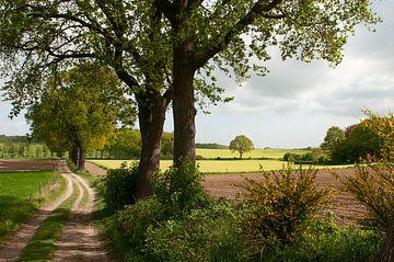 Groesbeek landschap van Nancy van Verseveld