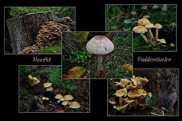 Herbstliche Pilze von Leo Huijzer