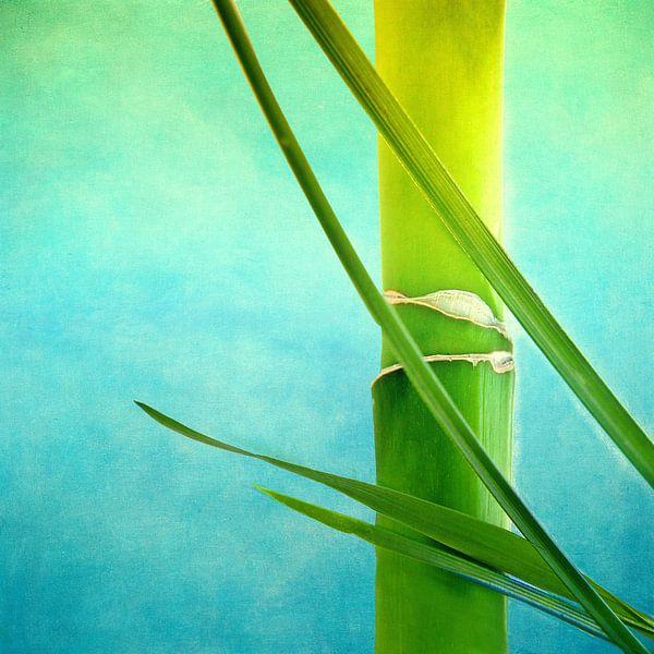 Bamboe van INA FineArt