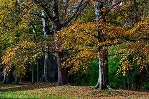 Herfstkleuren en vallende bladeren in het bos van