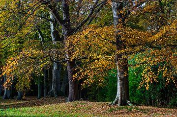 Herfstkleuren en vallende bladeren in het bos van Gijs Rijsdijk
