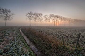 Bäume mit Weide von Moetwil en van Dijk - Fotografie
