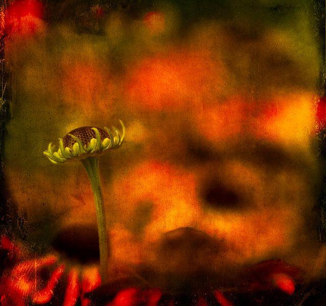 Flower bud von Greetje van Son