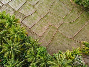 Reisfelder in Sri Lanka III von Nicole Nagtegaal