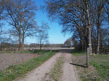 Zandweg in de buurt van de Veluwe Gelderland Nederland van Wilbert Van Veldhuizen