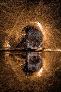 Europese Otter (Lutra lutra) water afschuddend