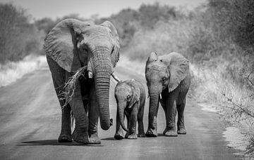 Een groepje olifanten in het Kruger Park Zuid-Afrika. van Claudio Duarte