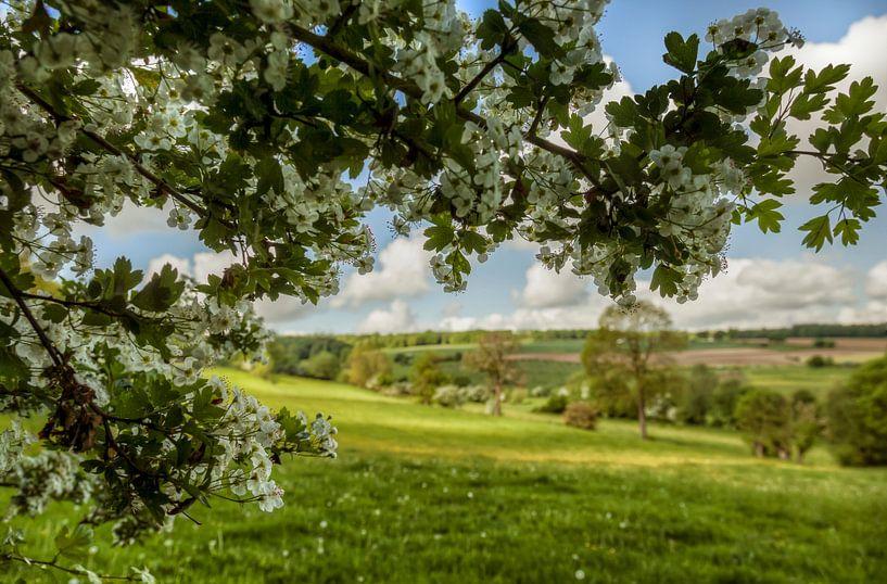 Bloesem in Zuid-Limburg van John Kreukniet