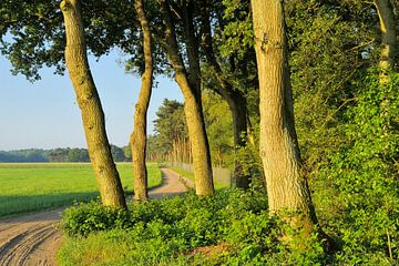 Beek en Bultpad van Willem van Leuveren Fotografie