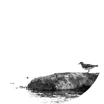Bird on a rock van Harald Harms