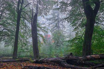 Vormittag im Laubwald von Ad Jekel