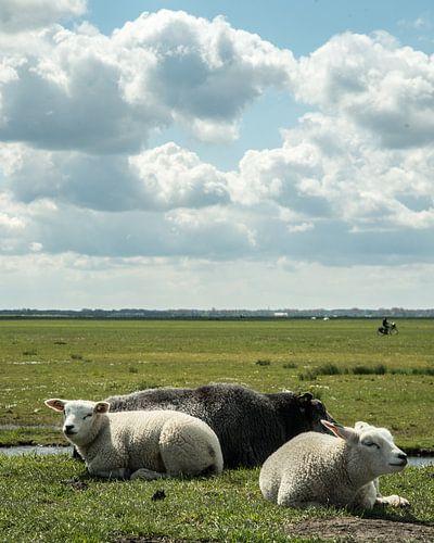 Niederländische Polderlandschaft