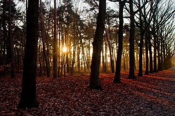 Zonsopkomst bos van Ronald Bruijniks