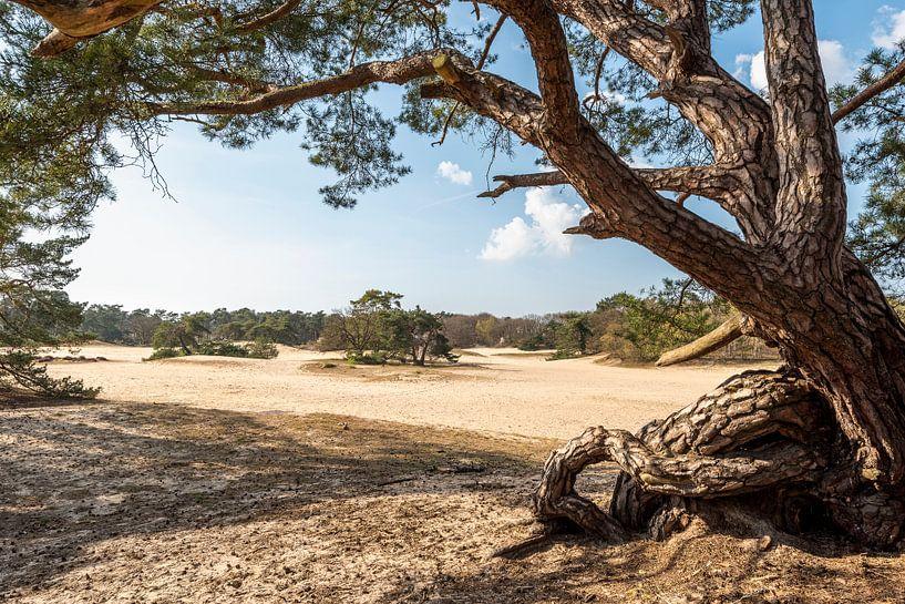 Blick auf die Kurzen Dünen von Rob IJsselstein