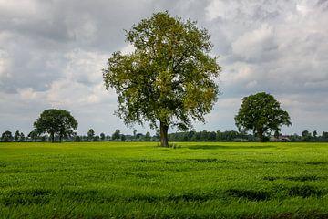 Bäume im hohen Gras von Jaap de Wit
