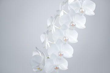 Orchidées sur Marieke Feenstra