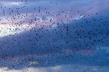 Spreeuwen in de wolken van Anja Brouwer Fotografie