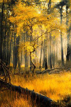 Goldener Herbst von Thomas Jansen