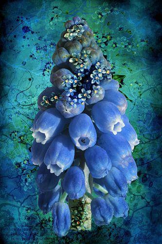 Blauwe druifjes met vergeet-me-nietjes.