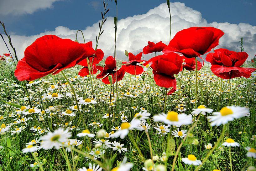 Poppies (klaprozen) van Tineke Visscher