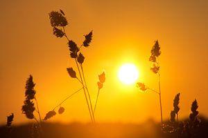 Zonsondergang in een veld, Denemarken van