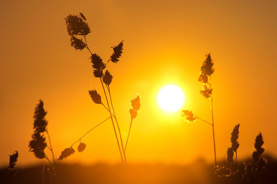 Zonsondergang in een veld, Denemarken van Nick Hartemink