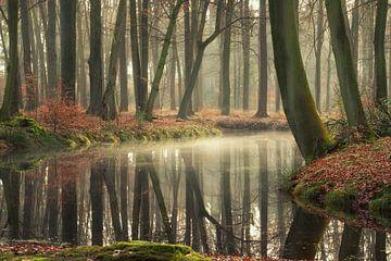 Le pouvoir de guérison des forêts sur Martin Podt