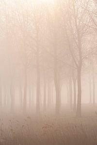 Mist in de polder (2) van