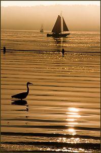 zonsondergang met silhouet kralingsepplas van Alain Ulmer