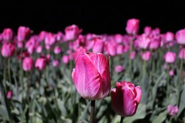 Roze tulpen bij nacht van Jacqueline Holman