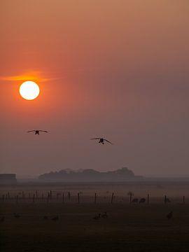 Vroege vogels van Martijn Wit