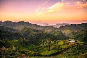 Bwindi National Park, Uganda van Thomas Bartelds
