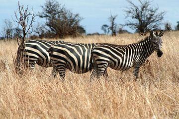 Drei Zebras in einer Zeile von Yvonne Smits