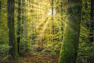 Une forêt verte dans la lumière du matin sur Tobias Luxberg