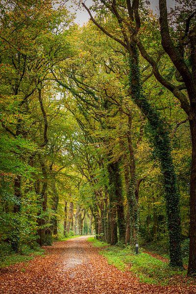 Bospad in de herfst van Hilda Weges