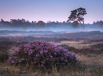 Paarse ochtend van Jeroen Linnenkamp