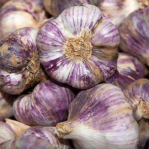 Purple garlic bulbs von Anouschka Hendriks