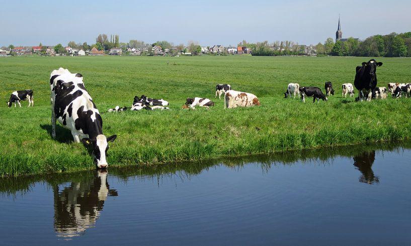 Koeien in de wei van Miranda Bos