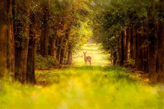 Hert in nationaal park de Hoge Veluwe van Arjen Roos