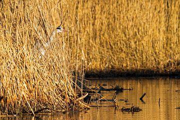 Camouflage reiger von Dennis van de Water