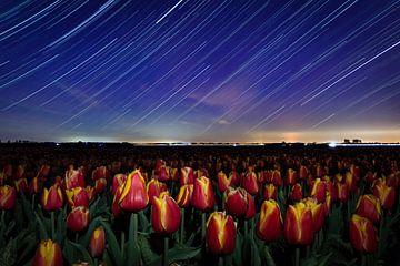 """""""Tulpen dansend in de nacht"""" van StephanvdLinde"""