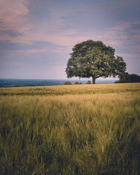 De oude eik in het veld van Steffen Peters