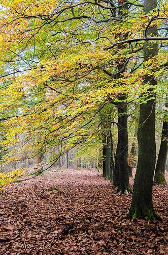 Het contrastrijke bospad