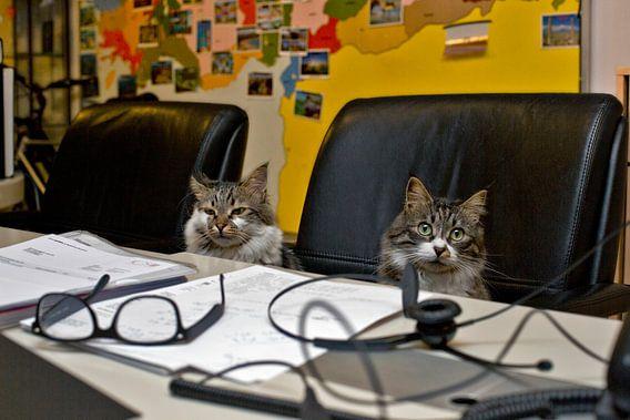 Cats in travel agency von Robert van Willigenburg