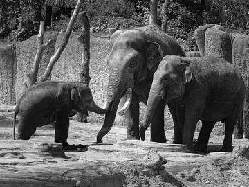 olifantenliefde van thijmen hoekerd
