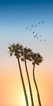 Palmen & Sonnenuntergang | Panorama von Melanie Viola