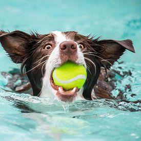 Hondenplons van Zsa Zsa Faes