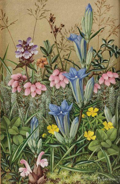 Wilde Blumen von Antonije Lazovic