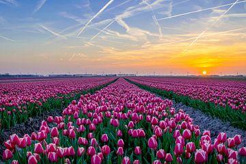Tulpenveld bij zonsondergang van Dennis Bresser
