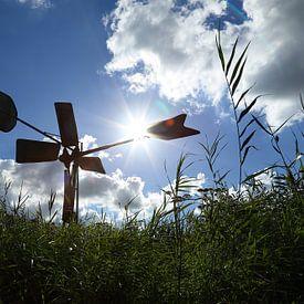 In de zomer, in de zon van Wim Zoeteman